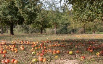 Породы и сорта плодово-ягодных культур