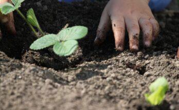 Требования к посадочному материалу для сада