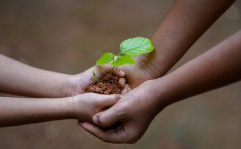 Уход за растениями на огороде