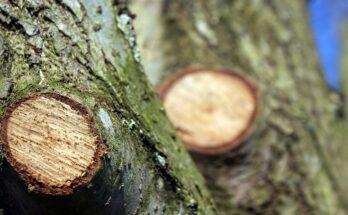 Исправление поврежденных и запущенных деревьев
