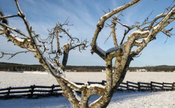 Яблоня, Пейзаж, Зима, Холодный, Зимний Пейзаж